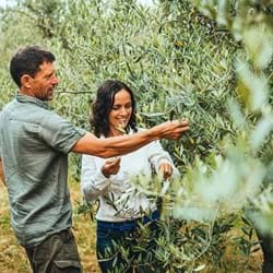 Gramona Farm, a walk among olives